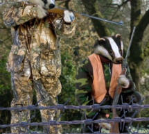 Badgers Agree To Cull Humans In Bid To Stop Spread Of Idiocy