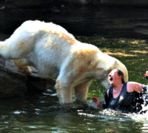 A drunk Scot is no match for the brute force of a polar bear