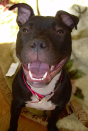 benji, a canine legend