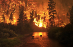 A forest fire rages on a cool day in 2050
