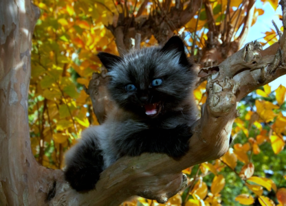 Black cat up a tree