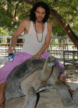 Russell Brand riding a tortoise