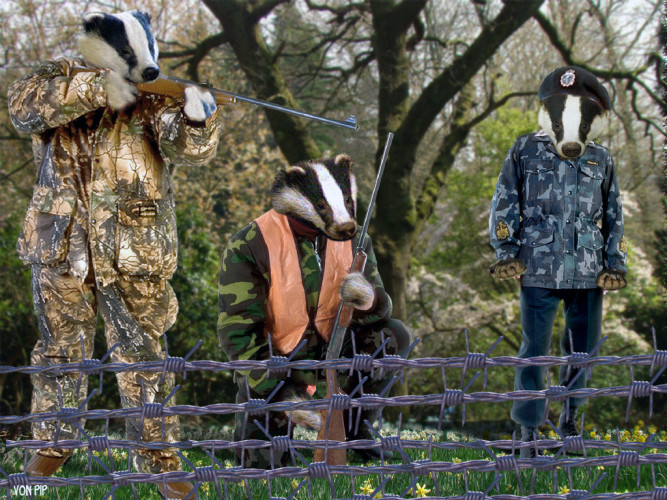Badgers begin cull of humans