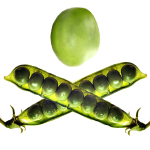 The Jolly Pea